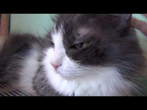Лечим глаз кошки