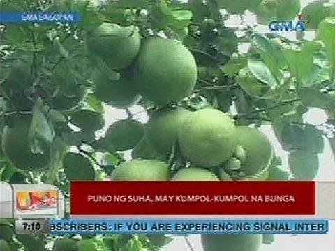 Kung paano upang mawala ang timbang sa ang mga binti bago at pagkatapos ng