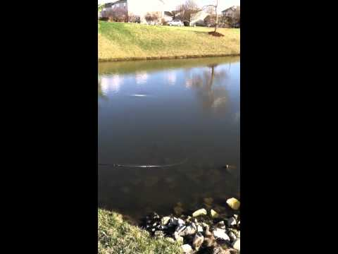 Retention pond bass fishing