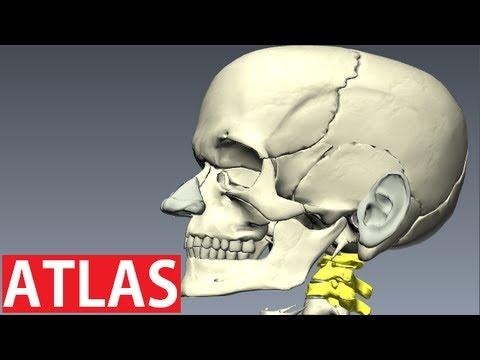 Heilung für Gelenkschmerzen in den Knien