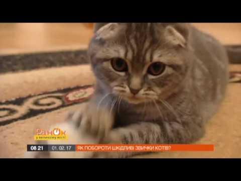Отучить кота царапать мебель возможно, если знать этот способ