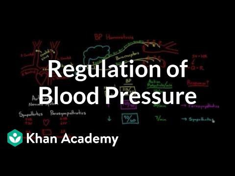Regulation of blood pressure with baroreceptors (video