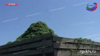 Земли сельхозназначения в Дагестане получат агропаспорта