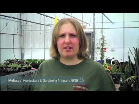 DVS in horticulture & garden centre operations