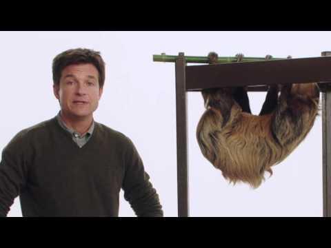 Zootopia (Viral Video 'Jason Bateman + Melon the Sloth')