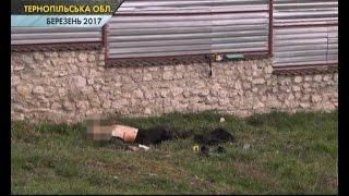 На Тернопільщині жінка вбила грабіжника
