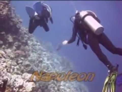 Diving Carnelia Hausriff Mehelg, Rotes Meer allgemein,Ägypten
