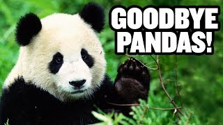 Giant Pandas Leave America Forever | US-China Trade Deal? | China Uncensored thumbnail