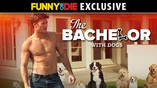The Bachelor With Dogs with Scott Eastwood