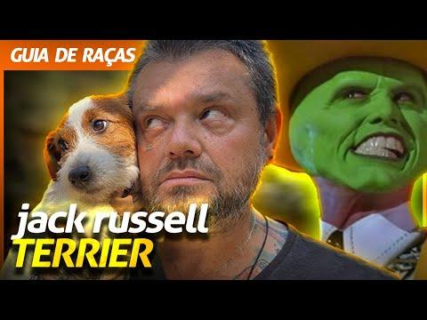 JACK RUSSELL TERRIER, O CACHORRO DO MÁSKARA!   RICHARD RASMUSSEN