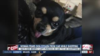 Bakersfield woman fears dog was stolen from car while shopping