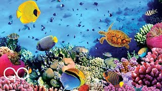 Relaxing Music for Stress Relief   Beautiful Aquarium   Soothing Music for Study Sleep & Spa