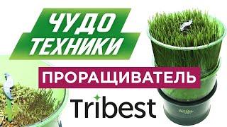 Чудо техники. Проращиватель Tribest FL-3000, польза ростков, технологии проращиваняия
