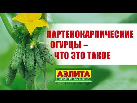 Партенокарпические огурцы, ГИБРИДЫ И ГМО!