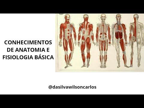Conhecimentos de Anatomia e Fisiologia Básica