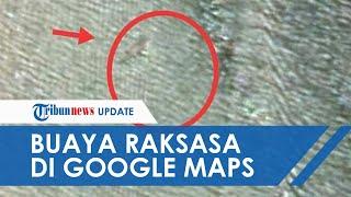 Pria di Nunukan Temukan Foto Diduga Buaya Sepanjang 15 Meter saat Buka Google Maps