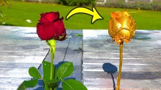 Turning a RED ROSE into a GOLD ROSE !
