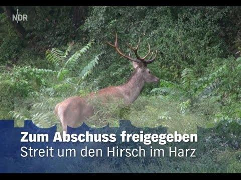 Streit um den Hirsch im Harz - Zum Abschuss freigegeben [Doku]