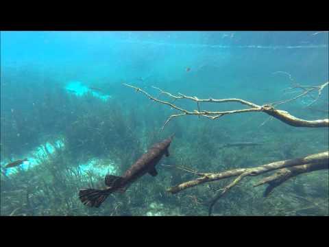 Video Rainbow Springs Florida Kayaking Adventure