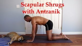 Scapular Shrugs with Antranik