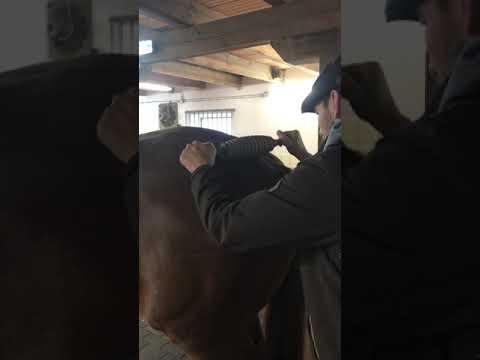 Come usare il prodotto sul cavallo - la parte posteriore