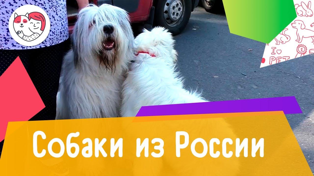 Породы собак, выведенные в России. Выпуск №1