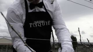 Pesquie Haute Culture - episode 1# la taille
