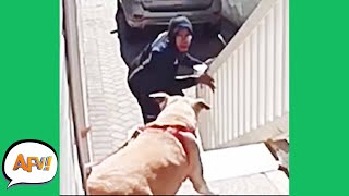 Barking Down the FAIL! 😱 | Funny Security Fails | AFV 2021