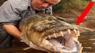 World's Most Terrifying Fish