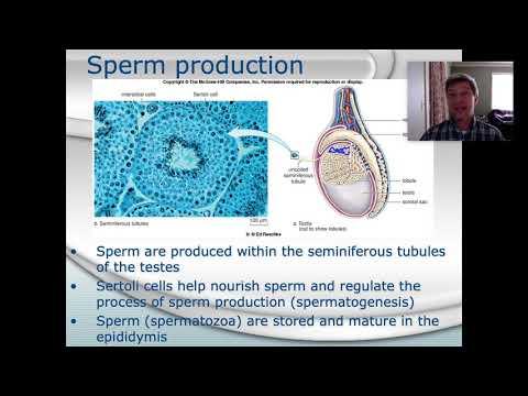 Condiții de domiciliu pentru mărirea penisului