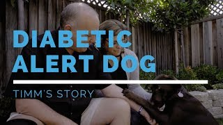 Diabetic Alert Dog Feature: Timm's Story