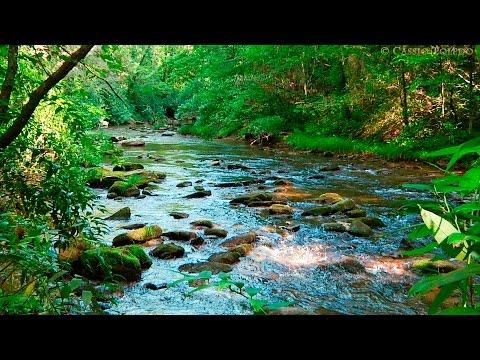 Naturgeräusche - Natur Meditation - Urwaldgeräusche