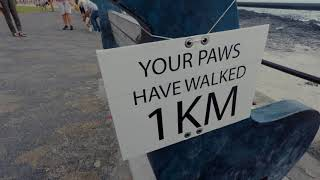 300 dogs walked the Sea Point promenade