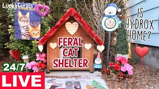 Feral Cat Shelter LIVE - Hydrox's King Of Hearts Valentine's Day Fairytale Cottage