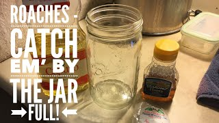 Roaches! - Catch em' by the Jar Full!