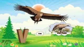 Teach your bird names - Kênh video giải trí dành cho thiếu
