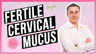 Improve your Cervical Mucus for Fertility