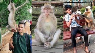Monkey Funny TikTok video   It will make you laugh 😂