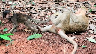 Emma And Grace Life 40 - Poor Baby Monkey Broken Leg