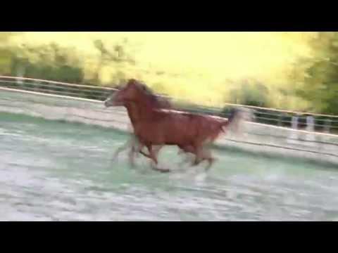 Lattivatore di cavallo per risposte di donne il prezzo