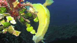 preview picture of video 'Diving Center Costa Paradiso'