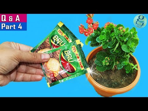 5 SHOCKING 😷 GARDENING IDEAS & SECRET QUESTIONS ANSWERED P4 | Garden Tips