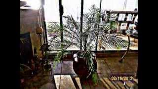 preview picture of video 'Villas De Rosarito  mcbcmx'