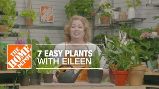 7 Easy Plants With Eileen   Indoor House Plants   The Home Depot