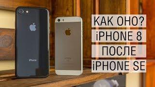 Неделя с iPhone 8: треск в динамике, глюки iOS 11, переход с iPhone SE и сравнение их камер