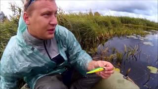 Когда и на что ловли рыбы в калининградской области