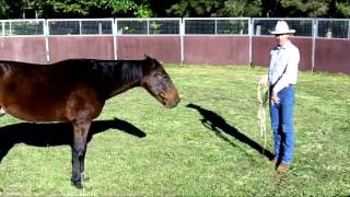 Solving Catching Problems With Your Horse Part 2