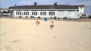 I'm A Bird Motherfucker! [Song + Music Video]