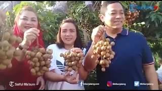 Panen Raya Kelengkeng di Kebun Wates, Wali KotaHendi: Mantab!