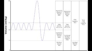 Lung - Lung Volumes & Lung Capacity